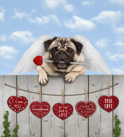 cute pug puppy dog with cupid angel wings and arrow, hanging on fence with wooden hearts with love text, blue sky Stock Photo