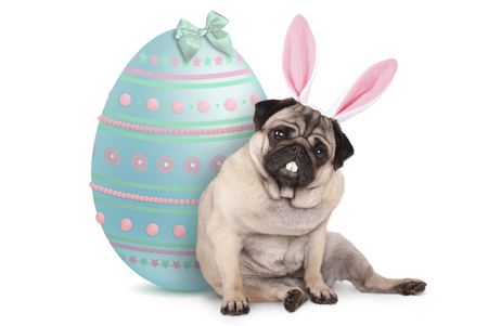 adorable cute pug puppy dog sitting down next to pastel colored easter egg, wearing bunny ears and teeth, isolated on white background Archivio Fotografico