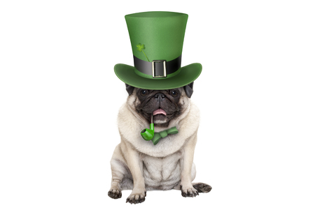cute smiling st patricks day pug puppy dog sitting down with green top hat and pipe, isolated on white background Stockfoto - 118765379