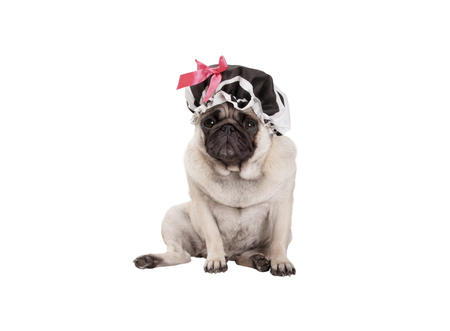 unhappy pug puppy dog with shower cap, sitting down, ready for taking a bath, isolated on white background
