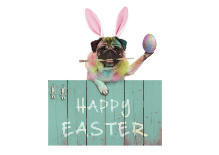 colorful easter pug dog bunny painting easter eggs with paintbrush, hanging on vintage wooden sign with text happy easter, isolated on white background