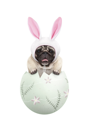 funny cute  pug puppy dog wearing bunny ears, sitting in pastel green easter egg, isolated on white background Stockfoto - 121069600