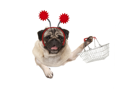 happy smiling pug puppy dog holding up wire metal shopping basket, wearing red diadem, isolated on white background