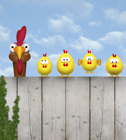 cute free range cihcken mother with her chick kids, sitting on old wooden fence, isolated on white background