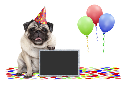 frolic smiling birthday party pug dog, with blackboard, confetti and balloons decoration, isolated on white background Stockfoto - 123023344