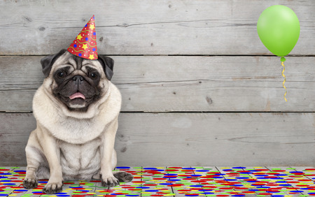 frolic smiling birthday party pug dog, with confetti and balloon, sitting down celebrating, on old wooden backgrond