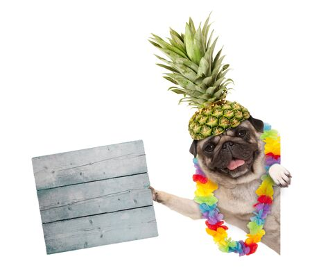 funny frolic summer pug dog with hawaiian flower garland and pineapple hat, holding wooden sign, isolated on white background
