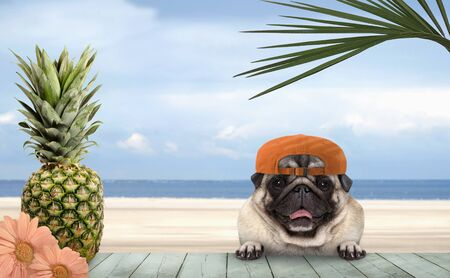smiling tropical summer pug dog with orange cap, with paws on vintage green wooden table and sea and beach on background