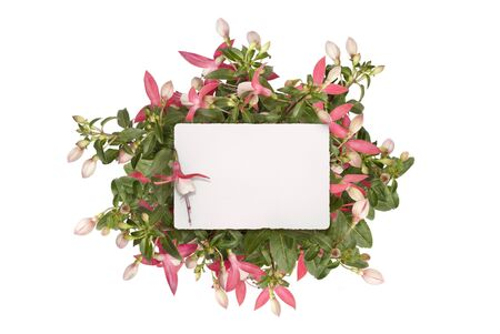 mockup flat lay of blank white paper card in pink fuchsia plug plant, isolated on white background
