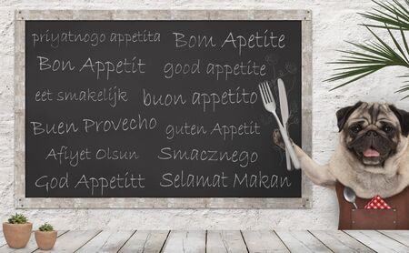 Enjoy your meal - blackboard with good appetite in multiple languages with happy smiling pug puppy dog with fork and knife cutlery and leather apron at wooden counter table Archivio Fotografico