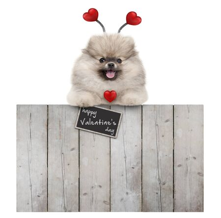 cute smiling pomeranian spitz pug puppy dog with red hearts and sign happy valentine's day, hanging with paws on wooden fence, isolated on white background Stockfoto - 139227383