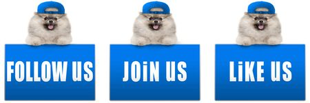cute pomeranian dog with blue cap, leaning with paws on blue social media sign with text follow us, like us and join us, isolated on white background, XL size