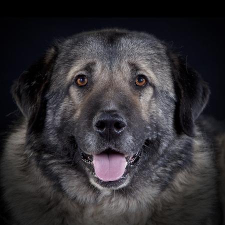Caucasian dog portrait Stock Photo