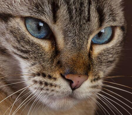 Cat face portrait in studio