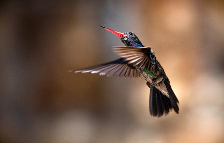 Hummingbird wings Stock Photo