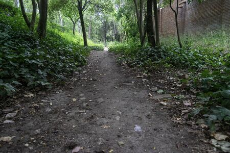 Path full of trees in the park on a hot summer day