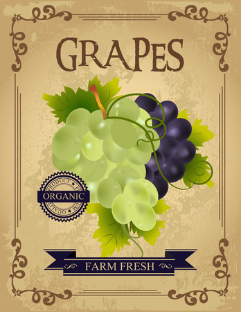 old poster: Vintage Fresh Grapes Poster. Retro farm fresh grapes design