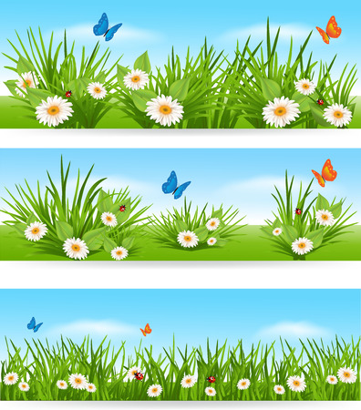 デイジー、蝶、晴れた空を背景に芝生のてんとう虫が、自然の背景  イラスト・ベクター素材