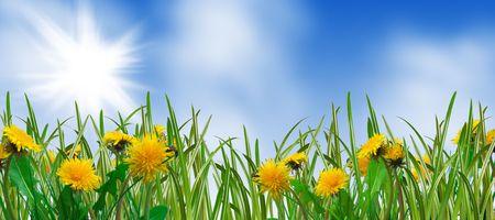 herbe verte et pissenlits - printemps des prairies Banque d'images