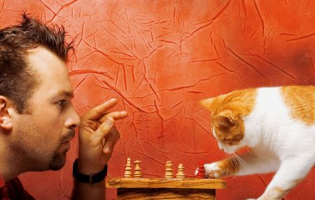Two chess game players: man and cat Stock Photo