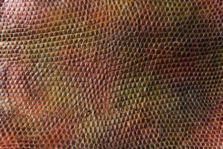 sneak: sneak skin texture Stock Photo