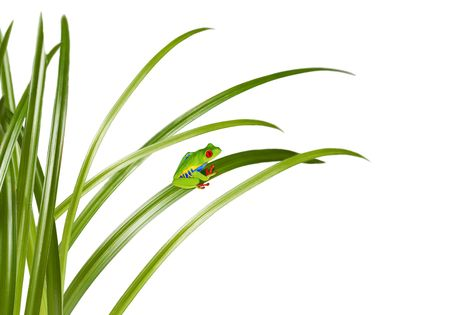 small green frog on a grass leaf