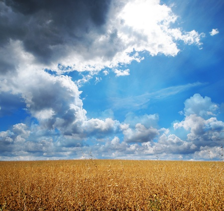 grain field and beautiful sky - summer background