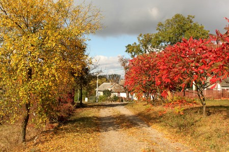gold road: Picturesque colorful autumn landscape. Gold and red trees in village with dirty road in the middle and small white house at the background. Stock Photo