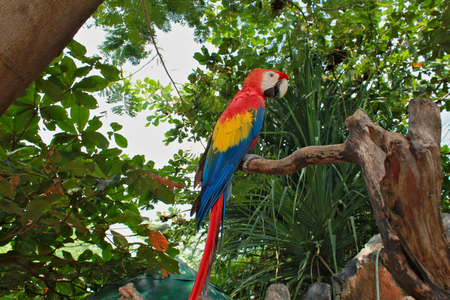 One red and yellow parrots sitting on a branch.
