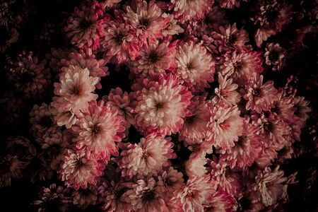 Chrysanthemum is a perennial autumn plant native to China. Chrysanthemums are divided into garden and greenhouse. They bloom from September to October. Nicely carved leaves. They have a very typical scent.