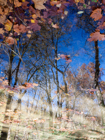 reflect: leaves over the water and the reflect of the trees