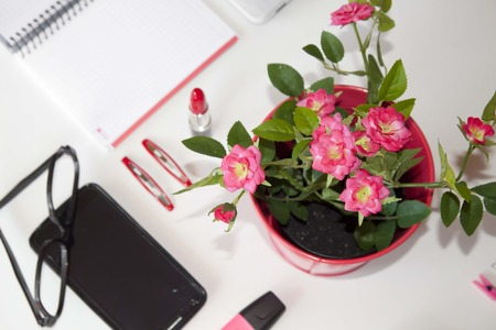 hairclip: flowerpot and other things in a table
