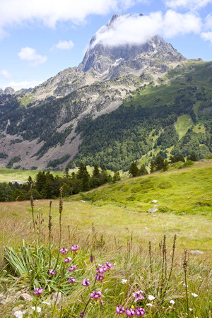 midi: Midi dOssau peak between trees in front of some flowers, Pyrenees, France Stock Photo