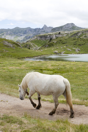 towards: white horse walking with his back towards you, near a lake between mountains in France
