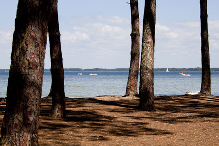 lake behind some trees with pedal boats and sail boats Stock Photo