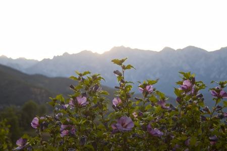 sunset in peaks of Europe behind the violets in Spain