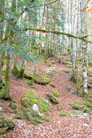 autumn in a forest full of leaves in Spain