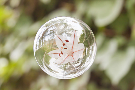 white flower flying in an air bubble like time would have stopped