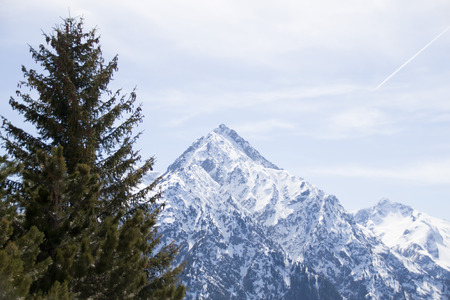 trees in front of a snowed peak in a winter day