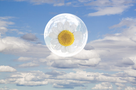 daisy flower in a bubble in the sky flying 스톡 콘텐츠