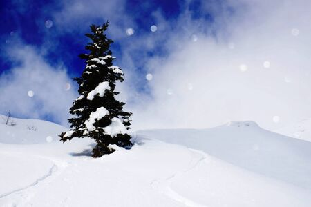pine tree in the middle of the mountain with snow and lights