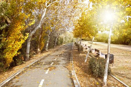 Bikeway in a park full of trees in Zaragoza with benches, Spain