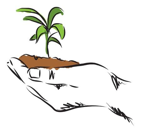 hand hanging plant illustration Stock Vector - 21448149