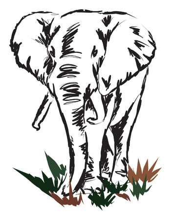line drawings: elephant illustration Illustration