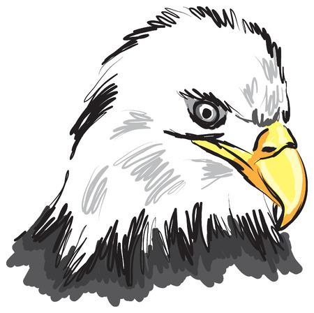 Falcon illustration Vector