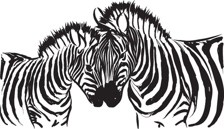 black and white zebra illustration