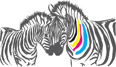 color cmyk zebra illustration Stock Vector - 35039631