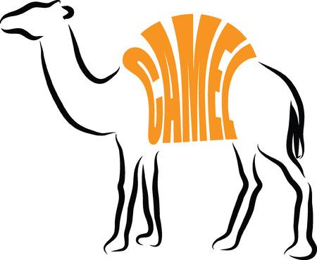 CAMEL ILLUSTRATION LETTERING Vectores