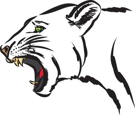 puma wild animal illustration Illustration