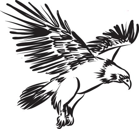 eagle flying: eagle flying contrast illustration